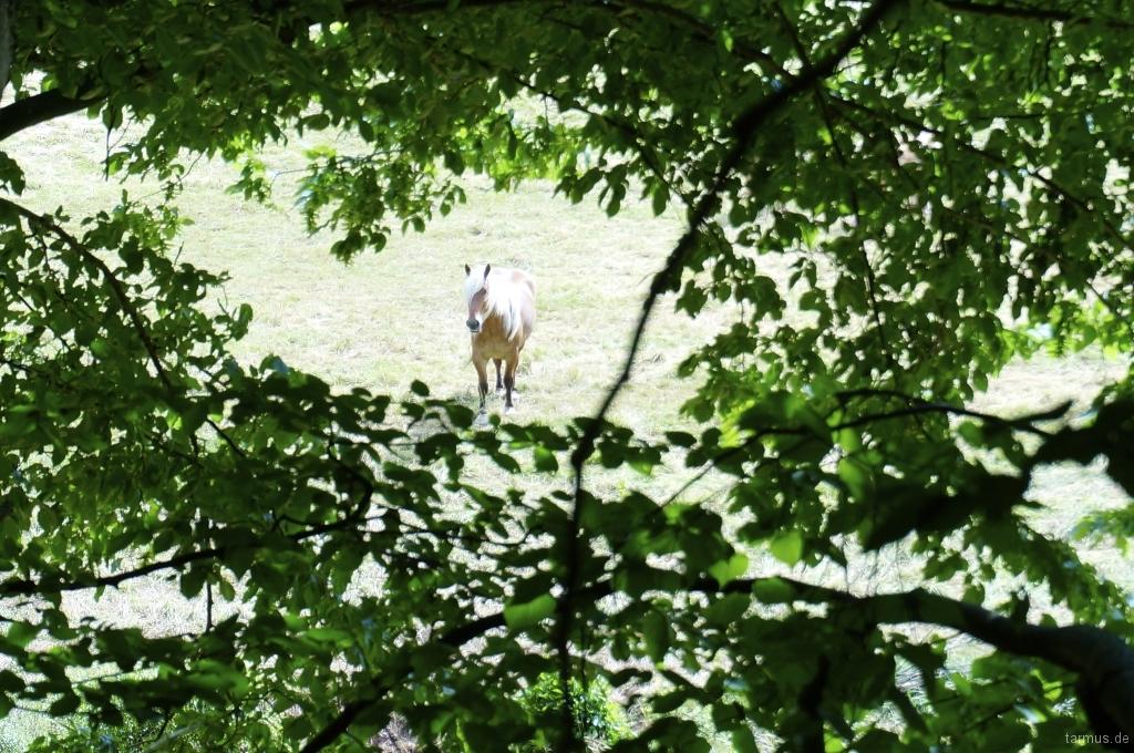 2014_06_13-Germany_Pfalz_Trekking-028