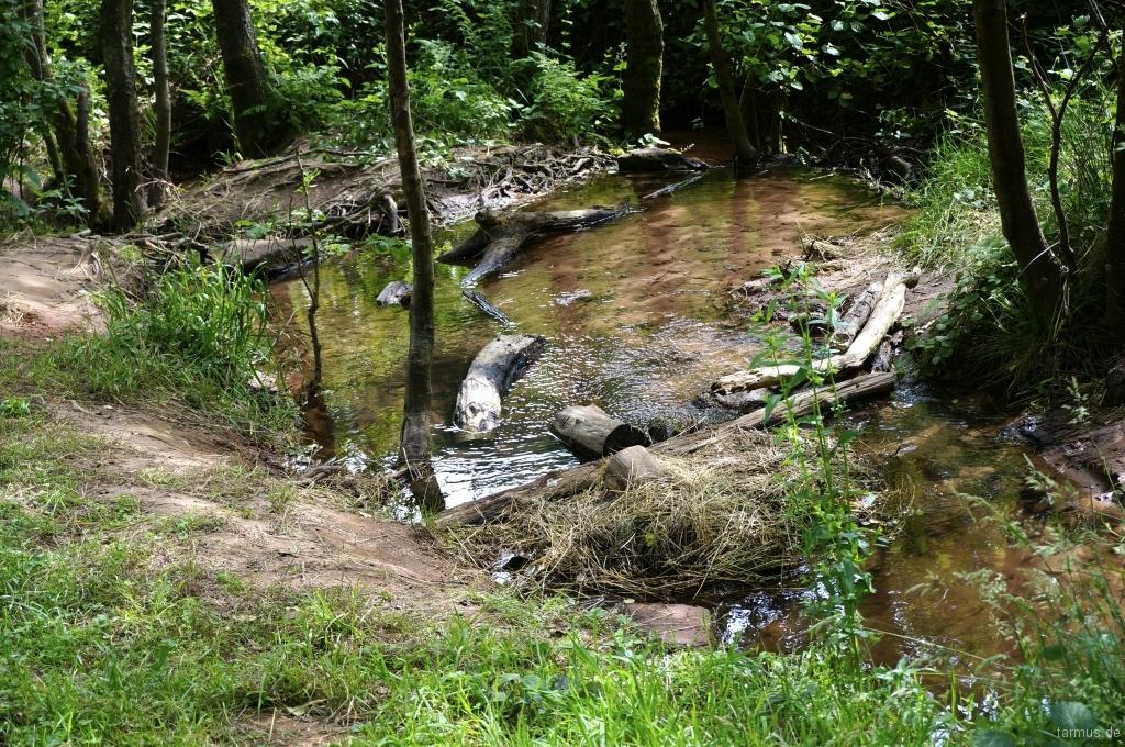 2014_06_13-Germany_Pfalz_Trekking-031