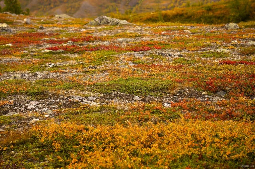 2014_09_07-Sweden_Kungsleden-082.jpg