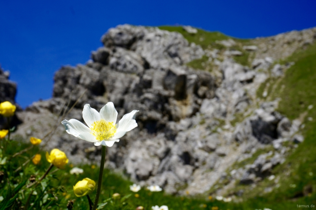 Flower in the Alps