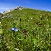 Hiking Princess Gina Trail in Liechtenstein 29