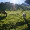 Hiking along the Valünerbach in Liechtenstein 01