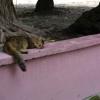2017_03_01-Maldives_Ukulhas_40